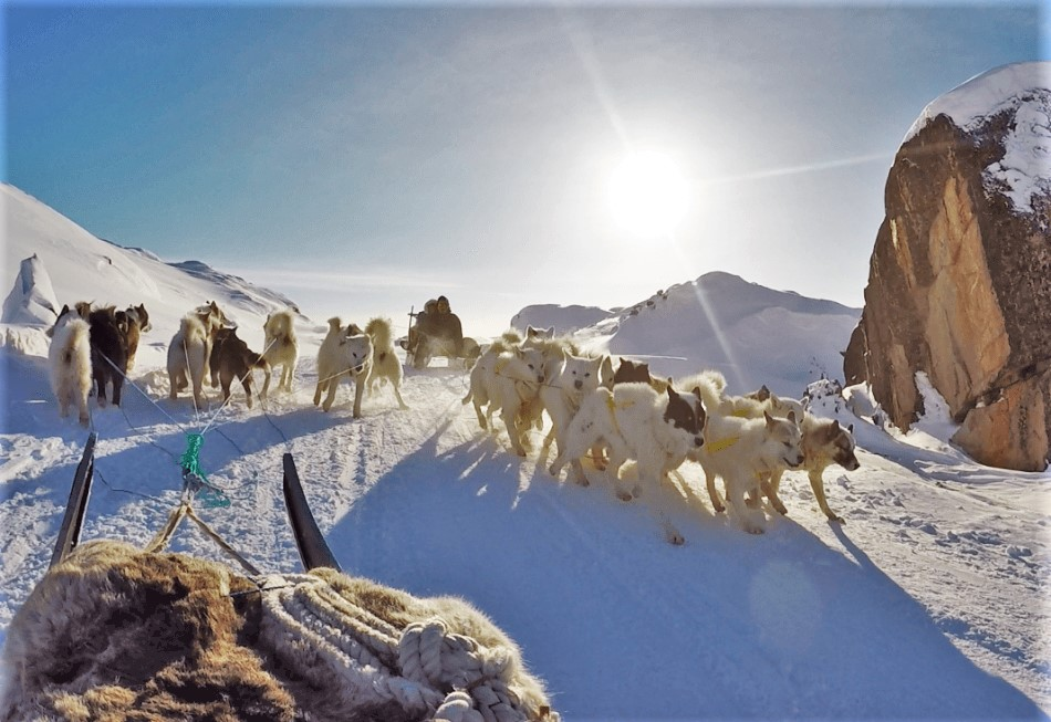 Arctic traffic, dog sleds passing by in Greenland