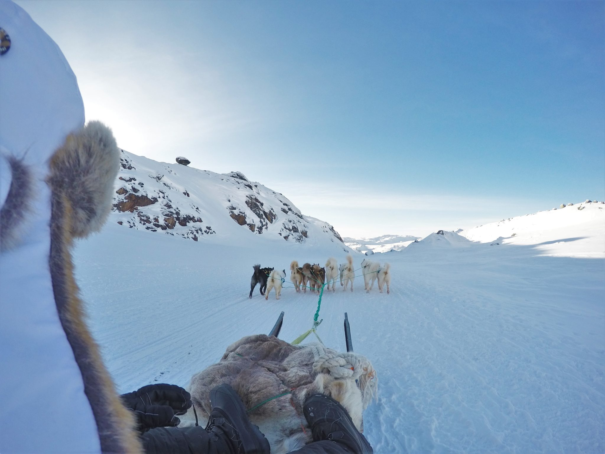 Dog Sledding Greenland view from the sled