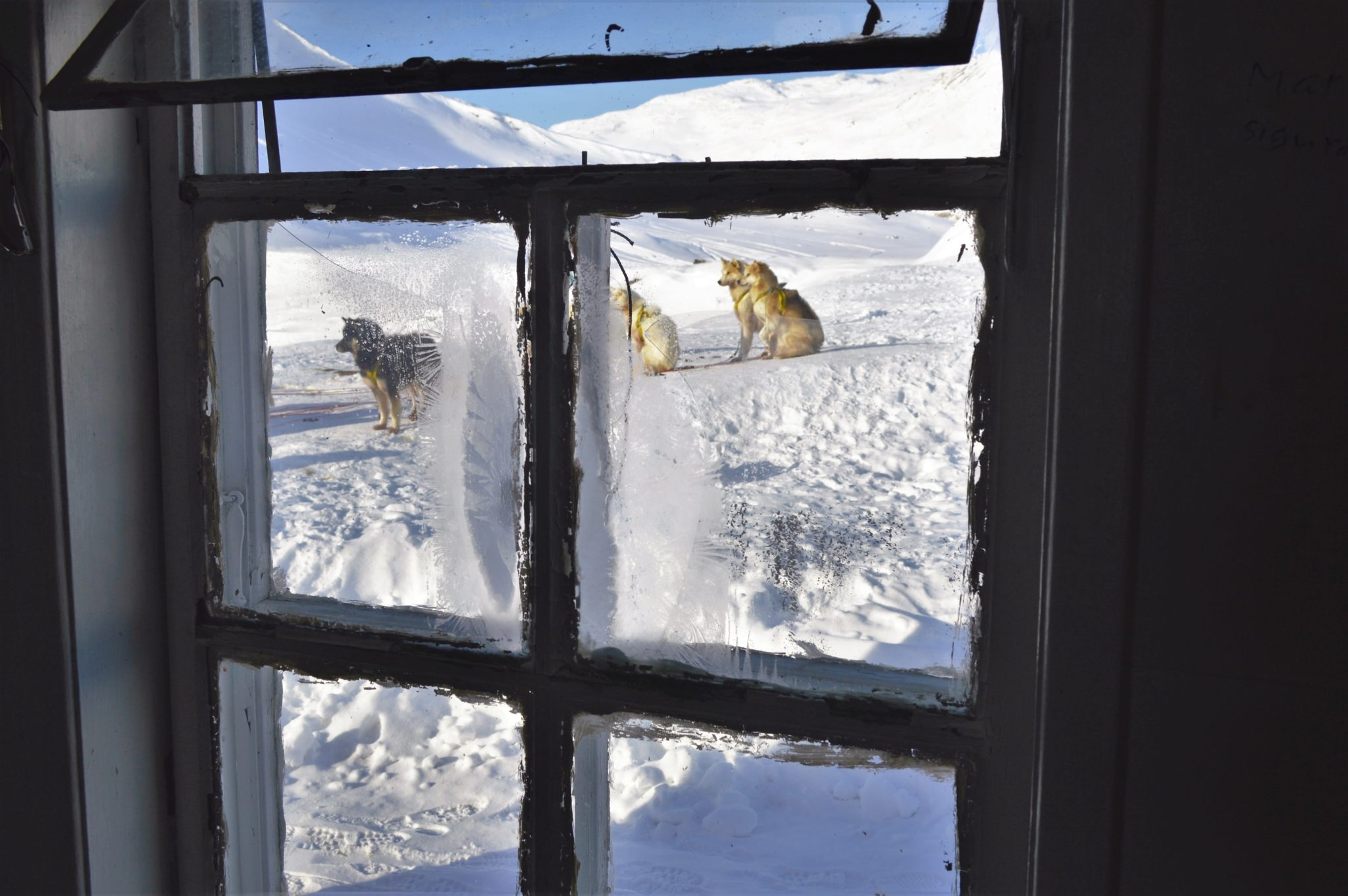 View of sled dogs out of the cabin window in Greenland