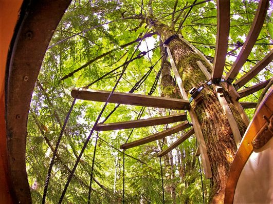 Above the canopy, Free Spirit Spheres, Vancouver Island, Canada