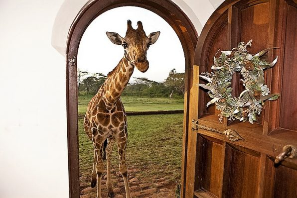 Front door welcoming at the Giraffe Manor, Nairobi, Kenya