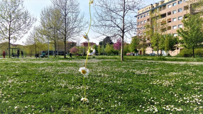 Daisy chains in park in Spring, Bologna, Italy, 48 hours in Bologna